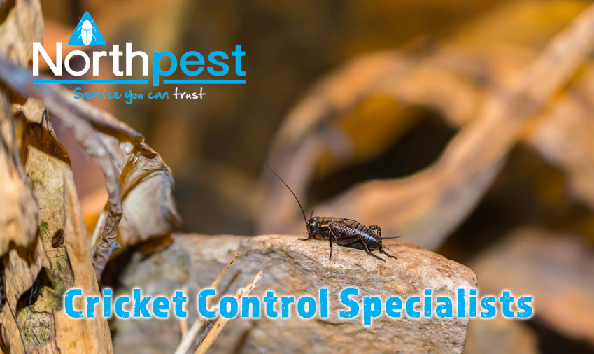 Cricket Control Specialists Northpest
